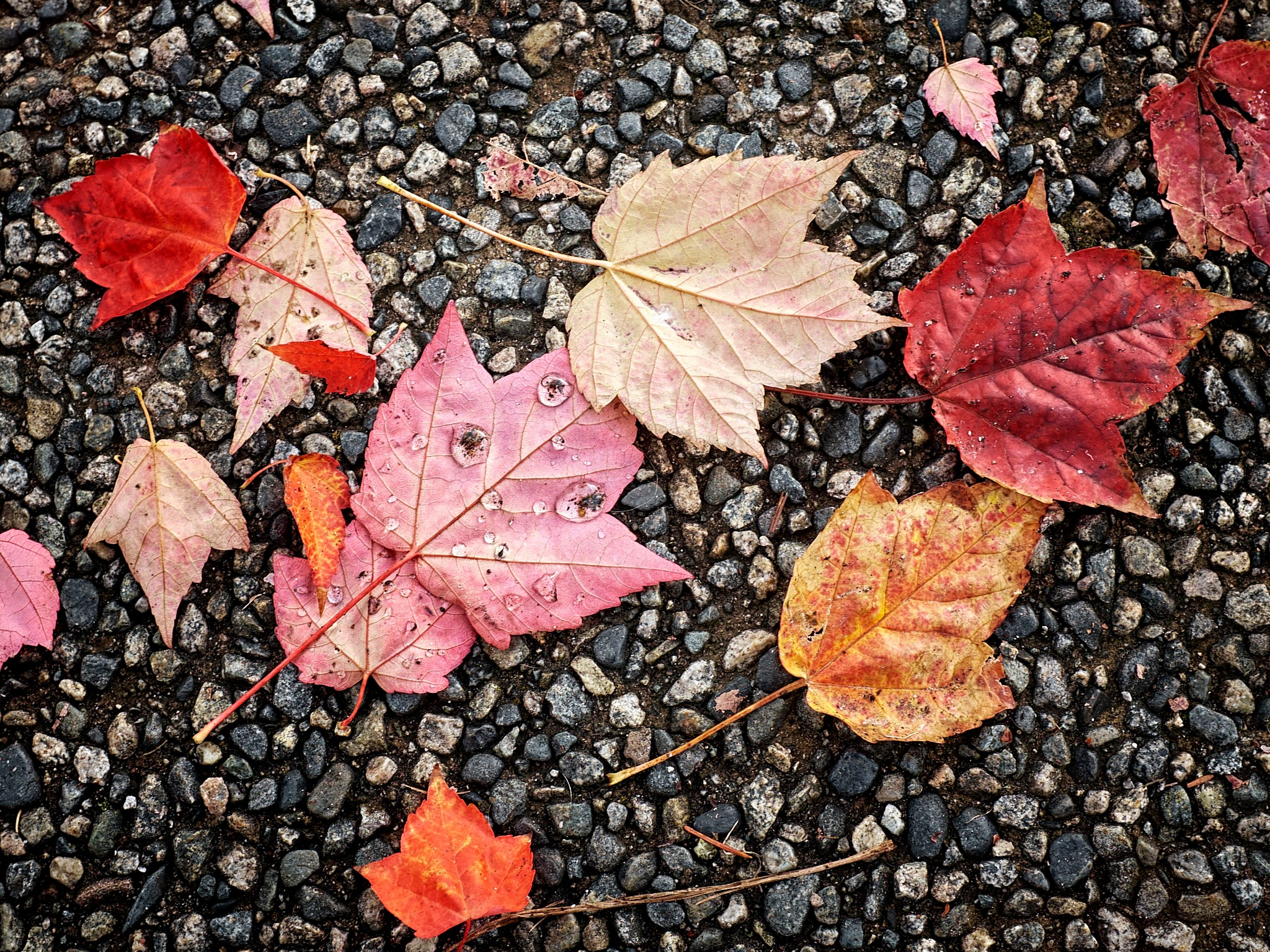 Urban leaves by Greg Mullaly