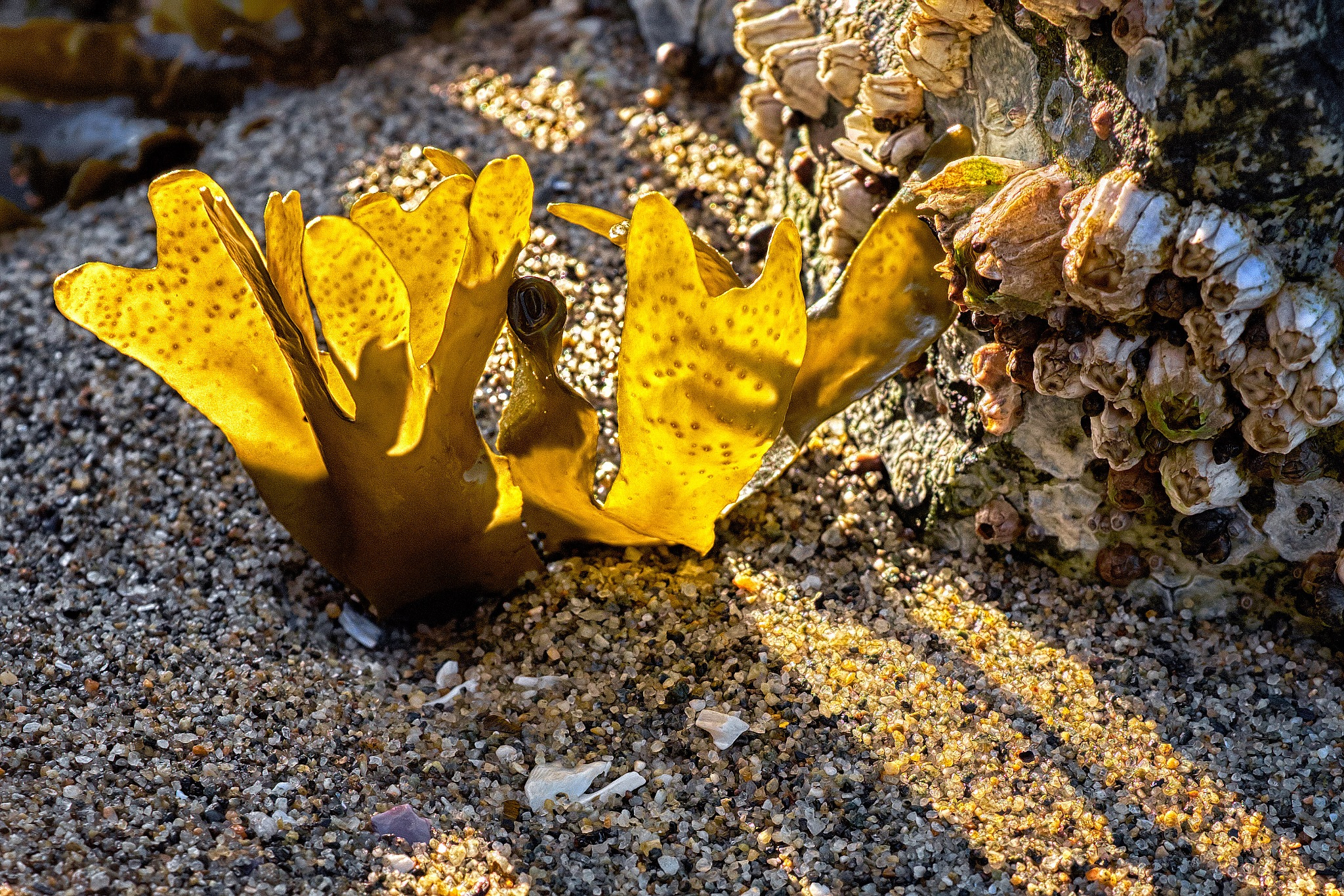 Seaweed and barnacles by Greg Mullaly