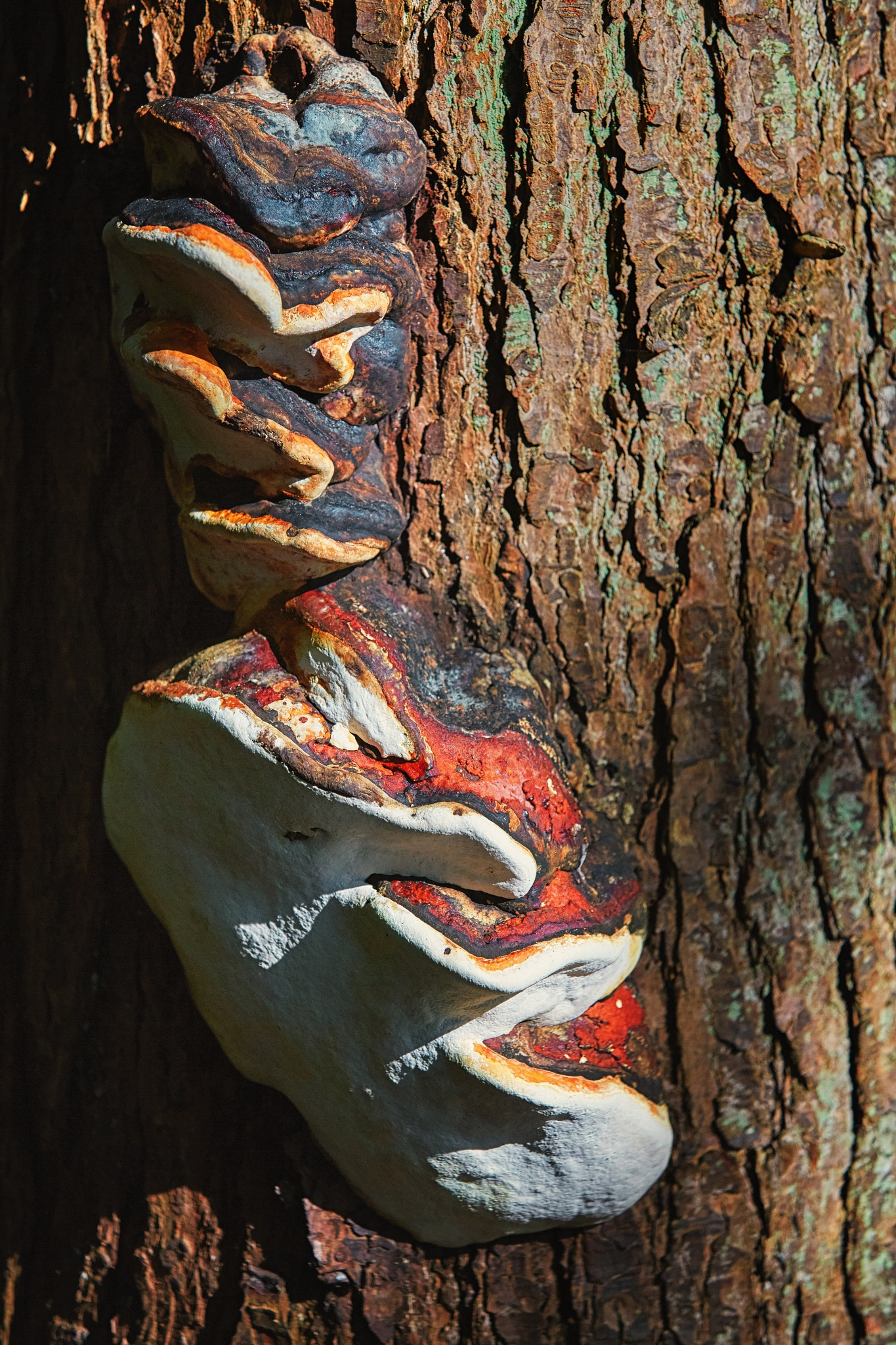 Forest fungus #2 by Greg Mullaly