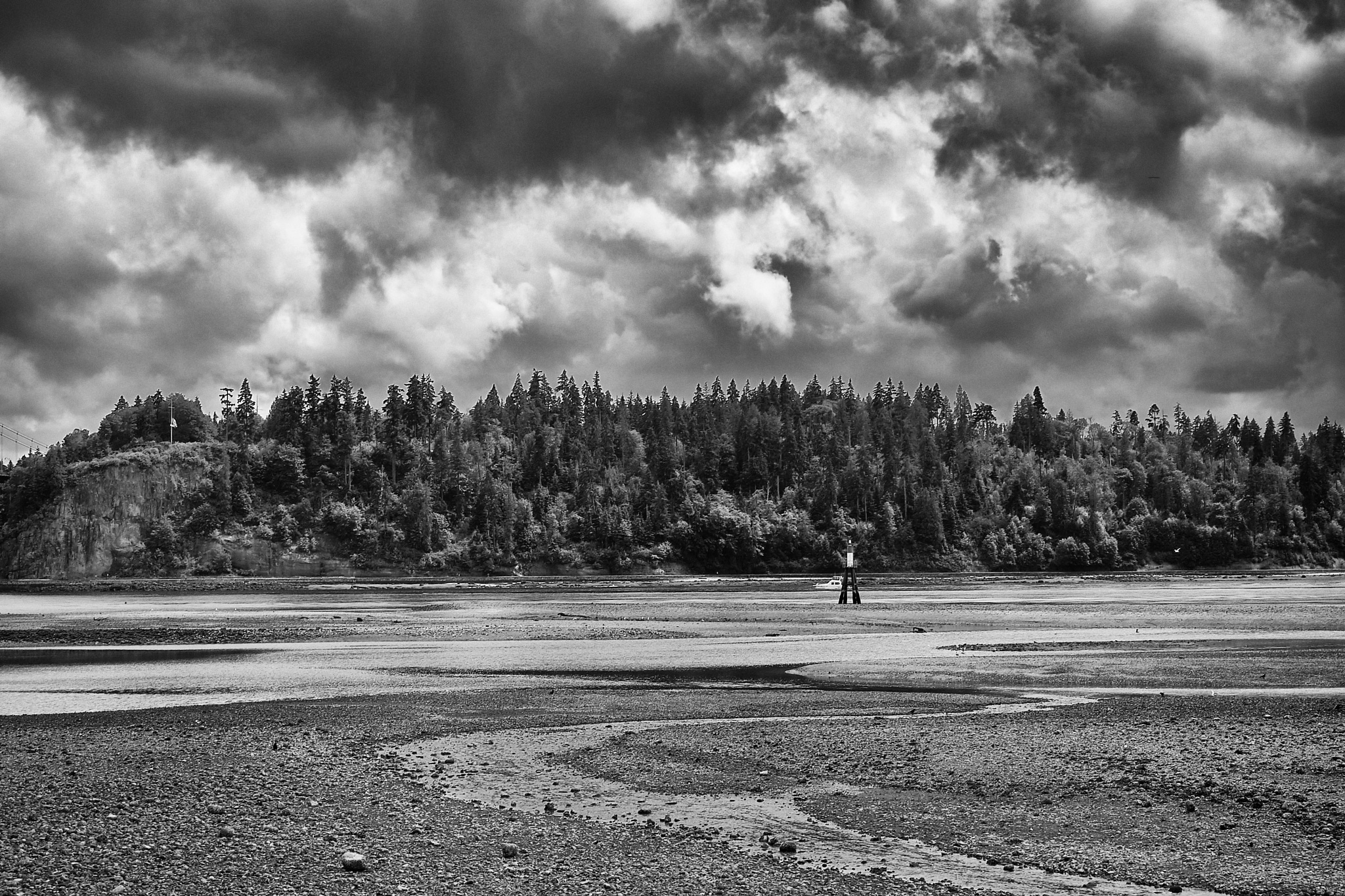 Stanley Park by Greg Mullaly