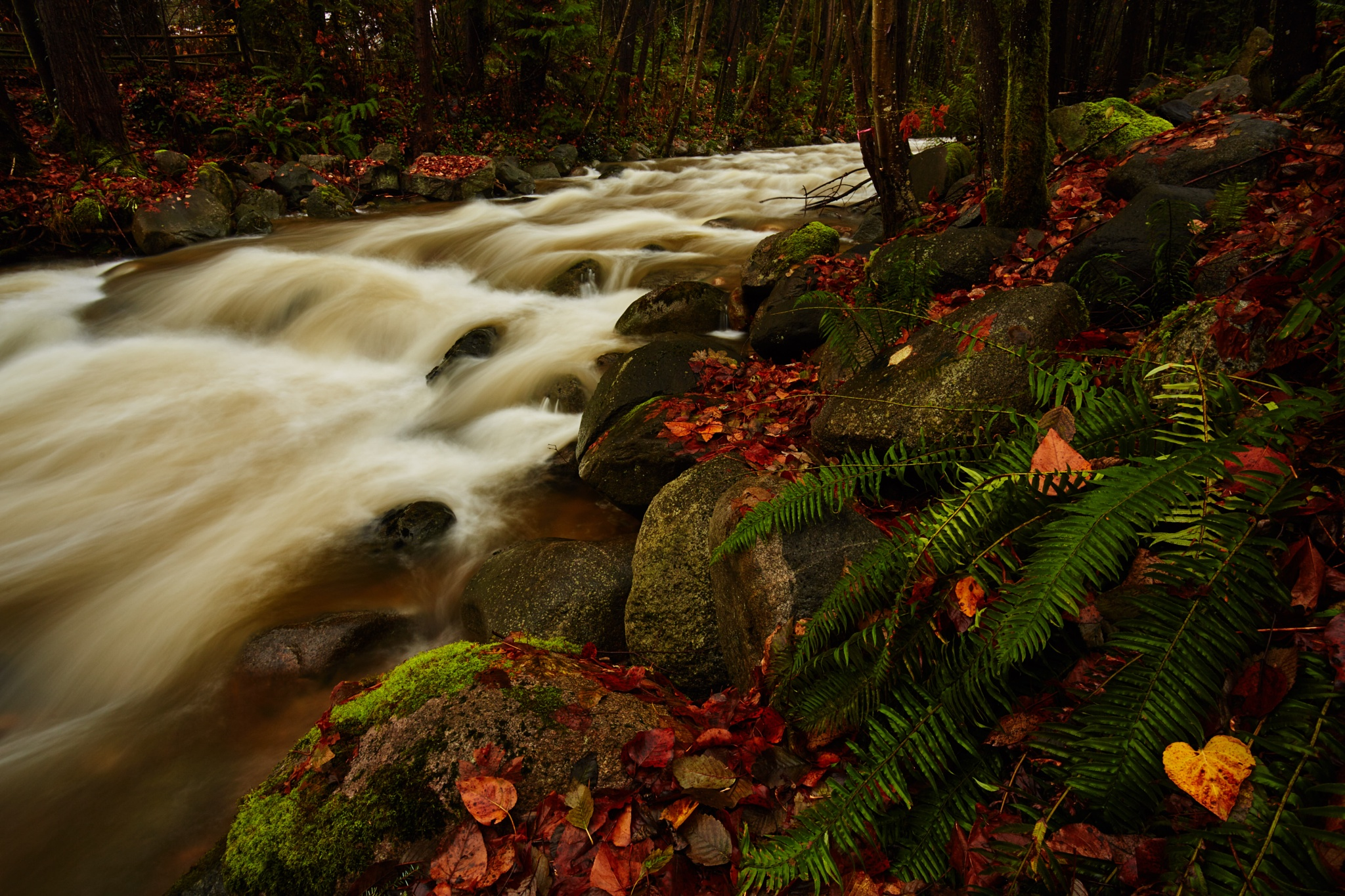 Mosquito Creek by Greg Mullaly