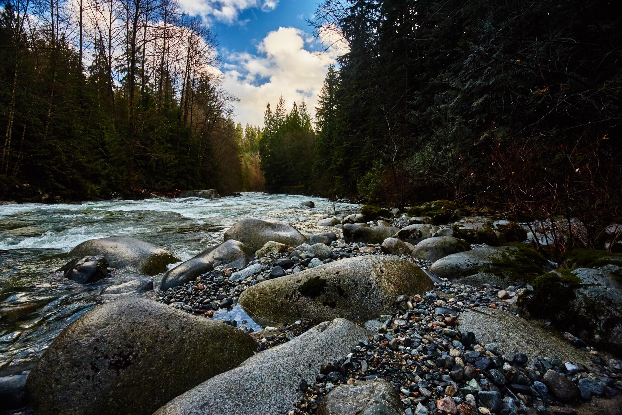 Lynn Creek by Greg Mullaly