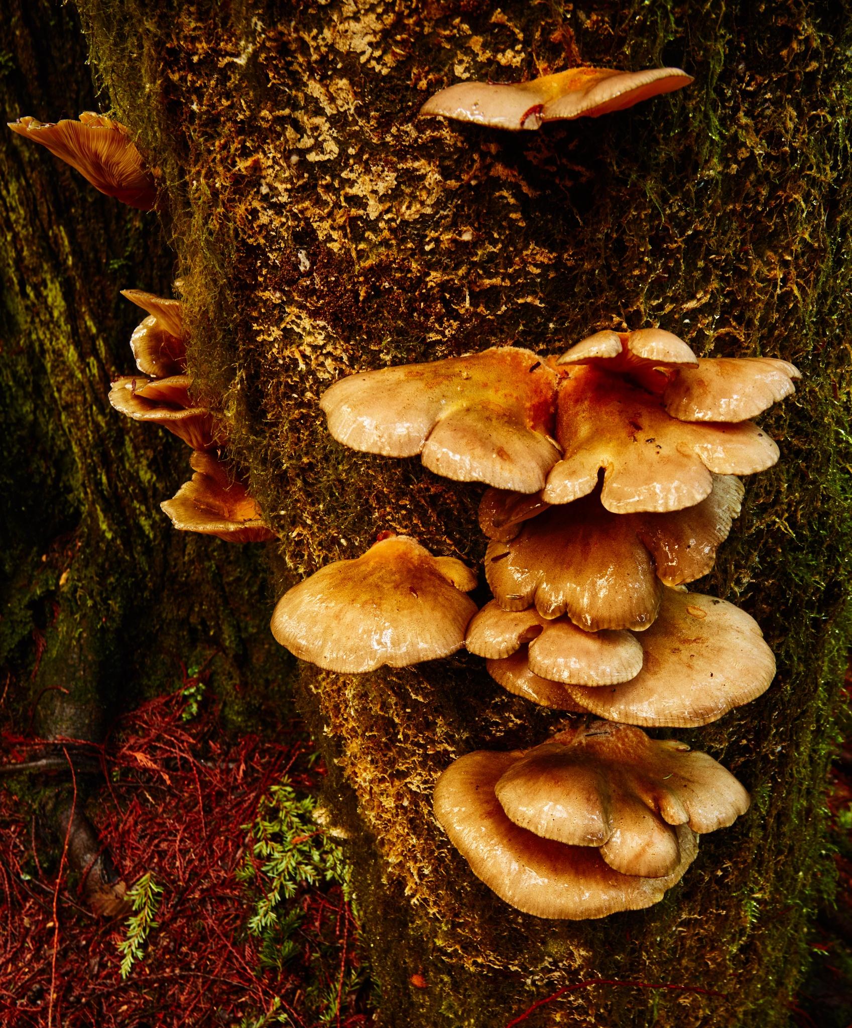 Fungi by Greg Mullaly