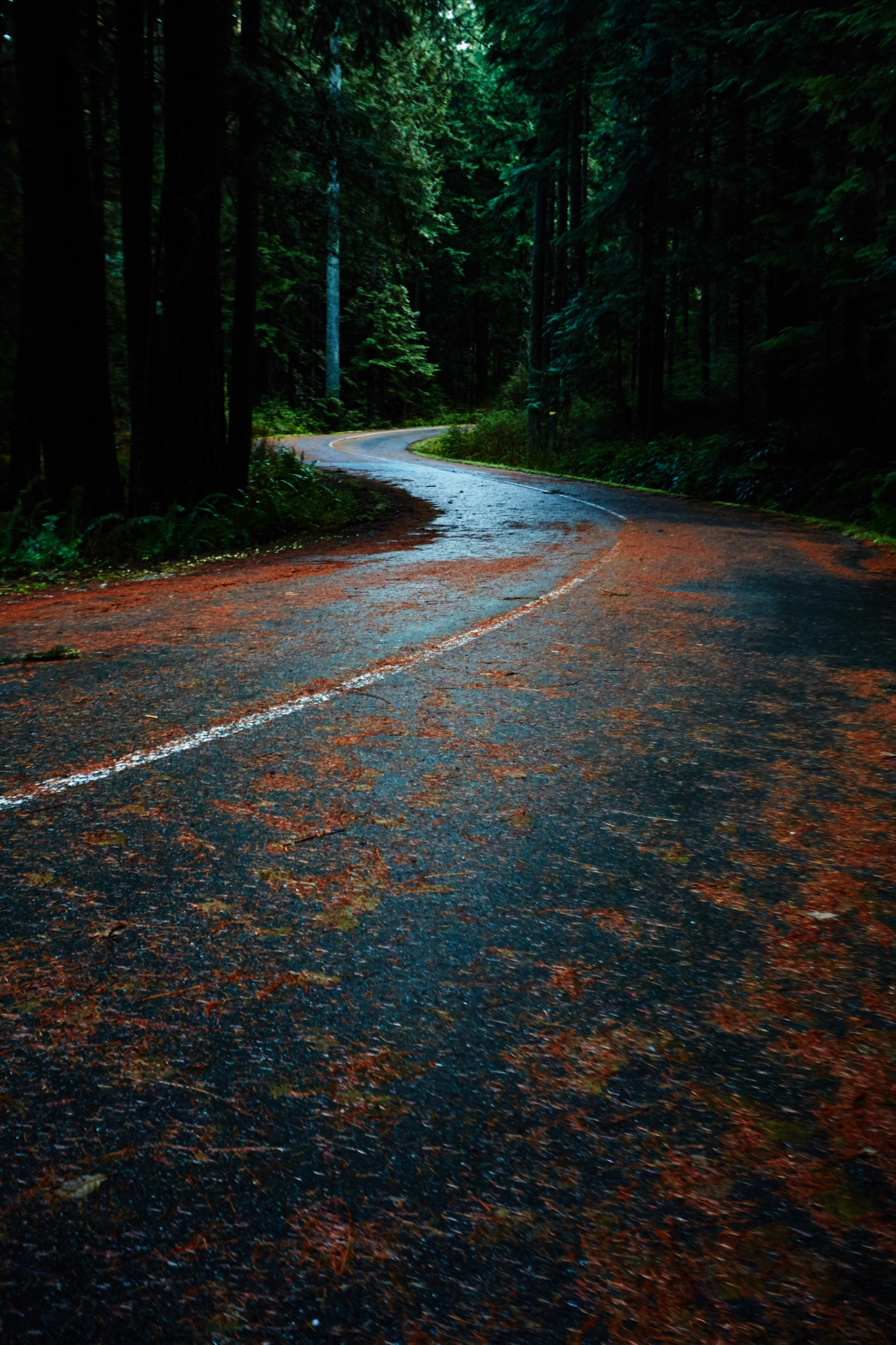Road in the woods by Greg Mullaly