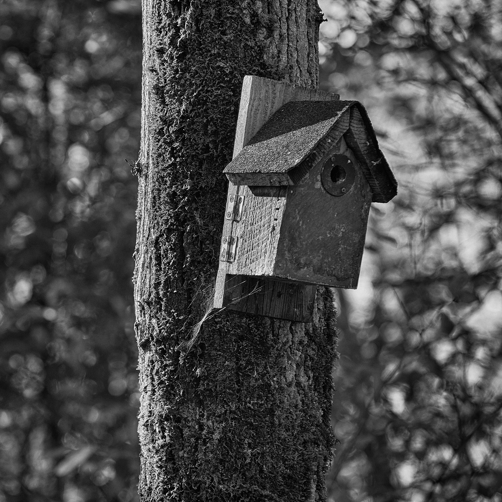 Bird house by Greg Mullaly