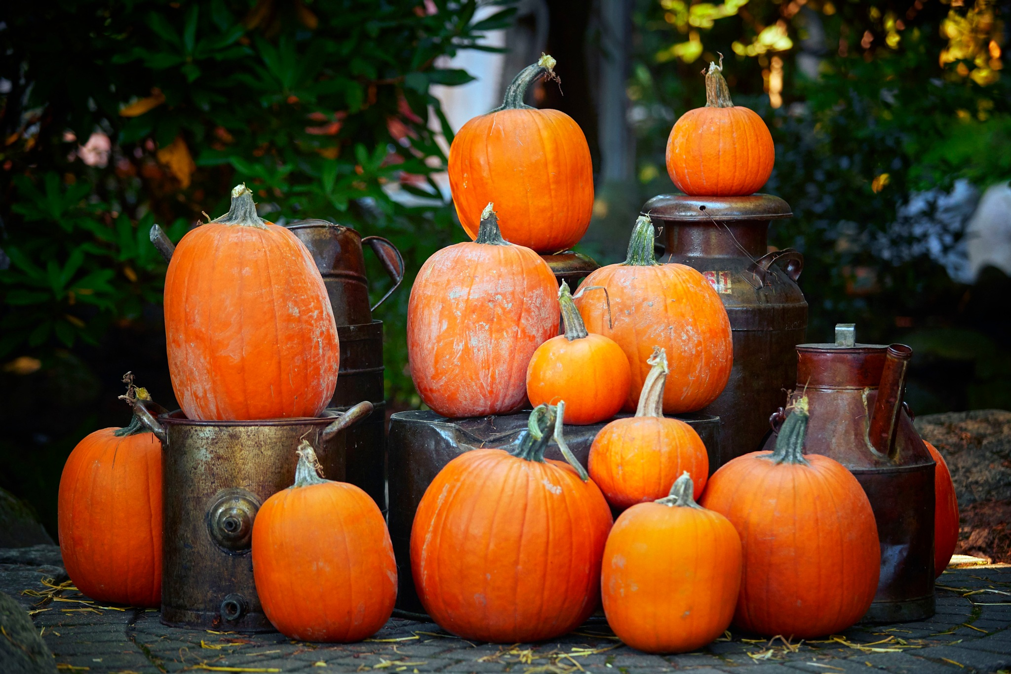 Pumpkins and milk jugs by Greg Mullaly