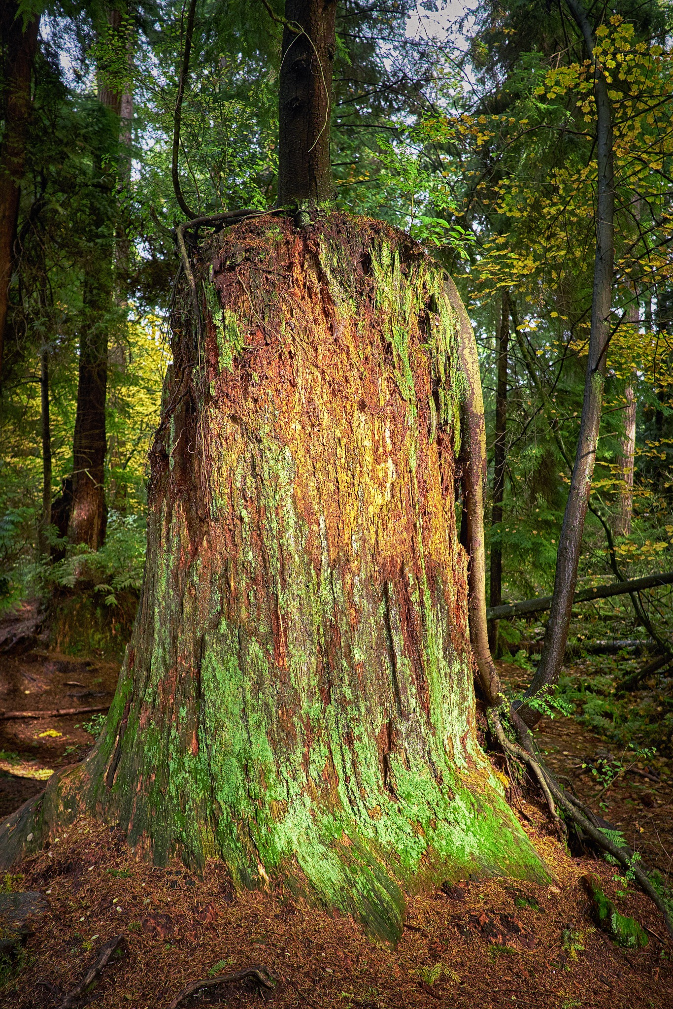 Once a giant by Greg Mullaly