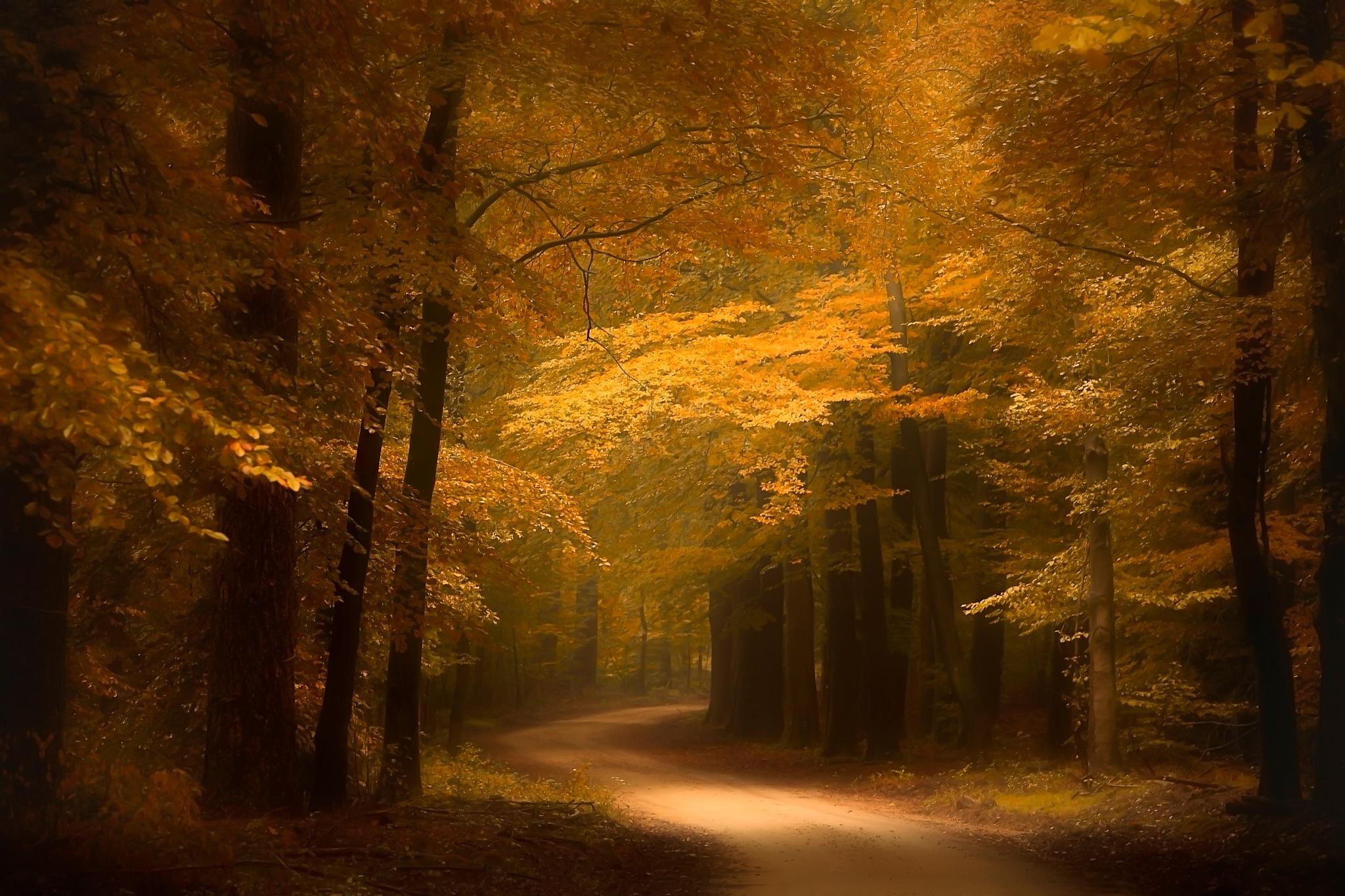 Golden forest by Erwin Stevens