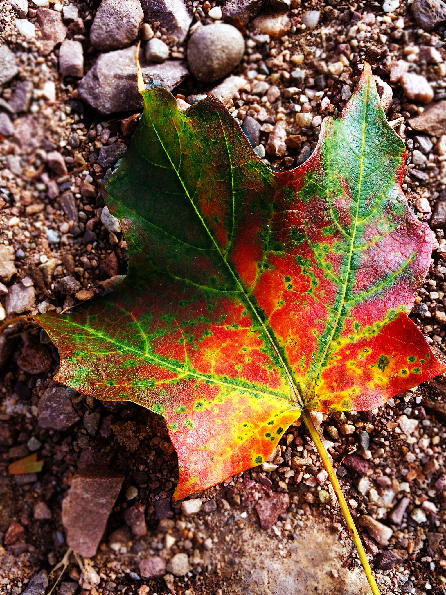 Signs of Fall by Scott