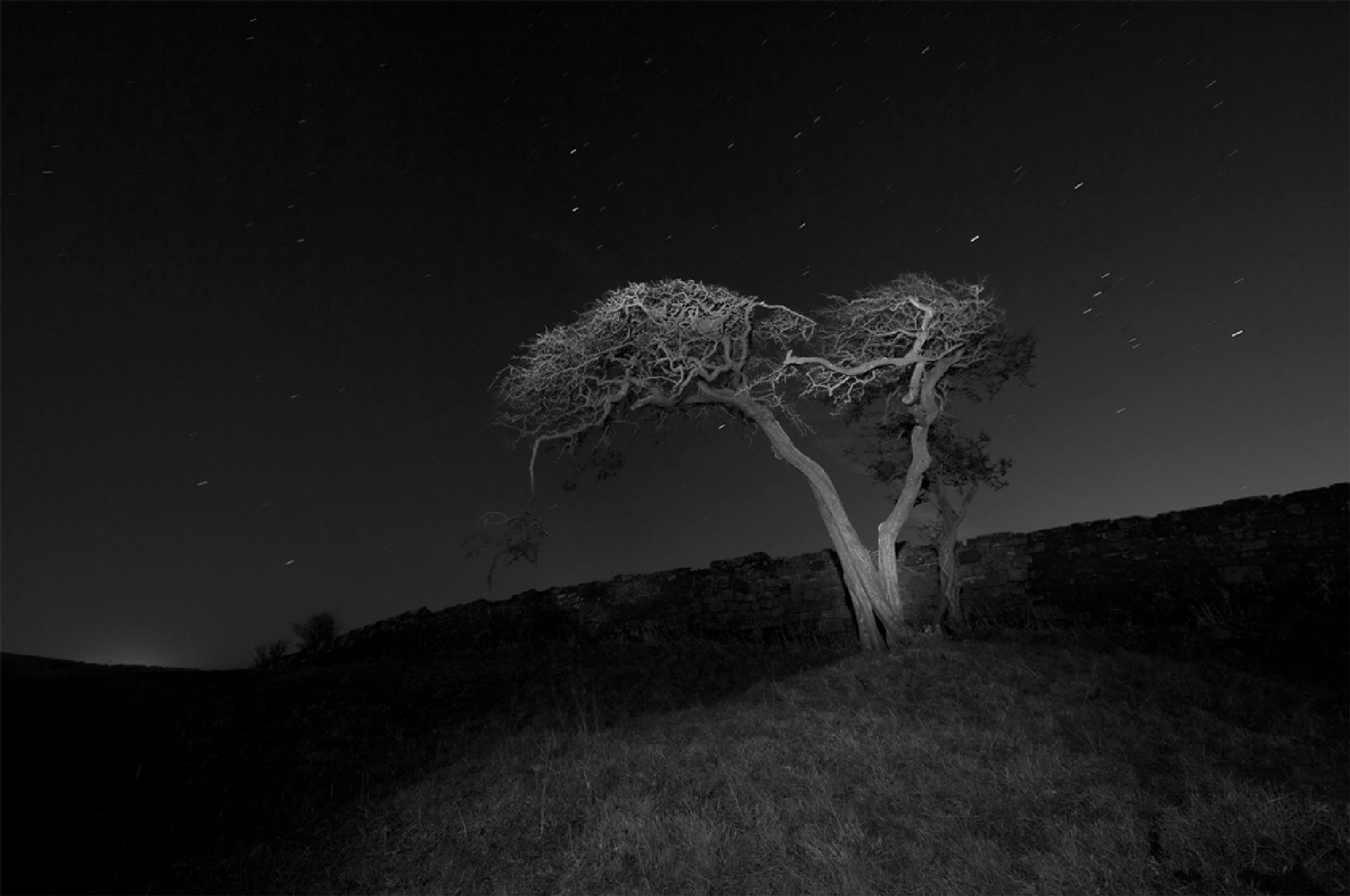 Tree At Night by Steve Phelps