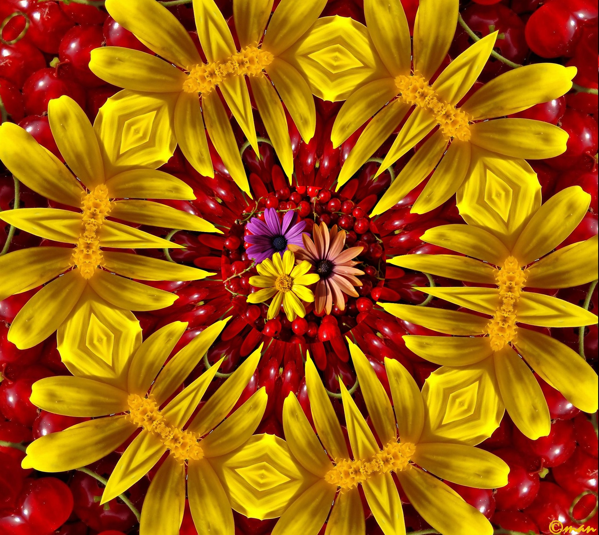 kaleidoscope flowers in a tray of red currants   by Mariano Arizzi Novelli