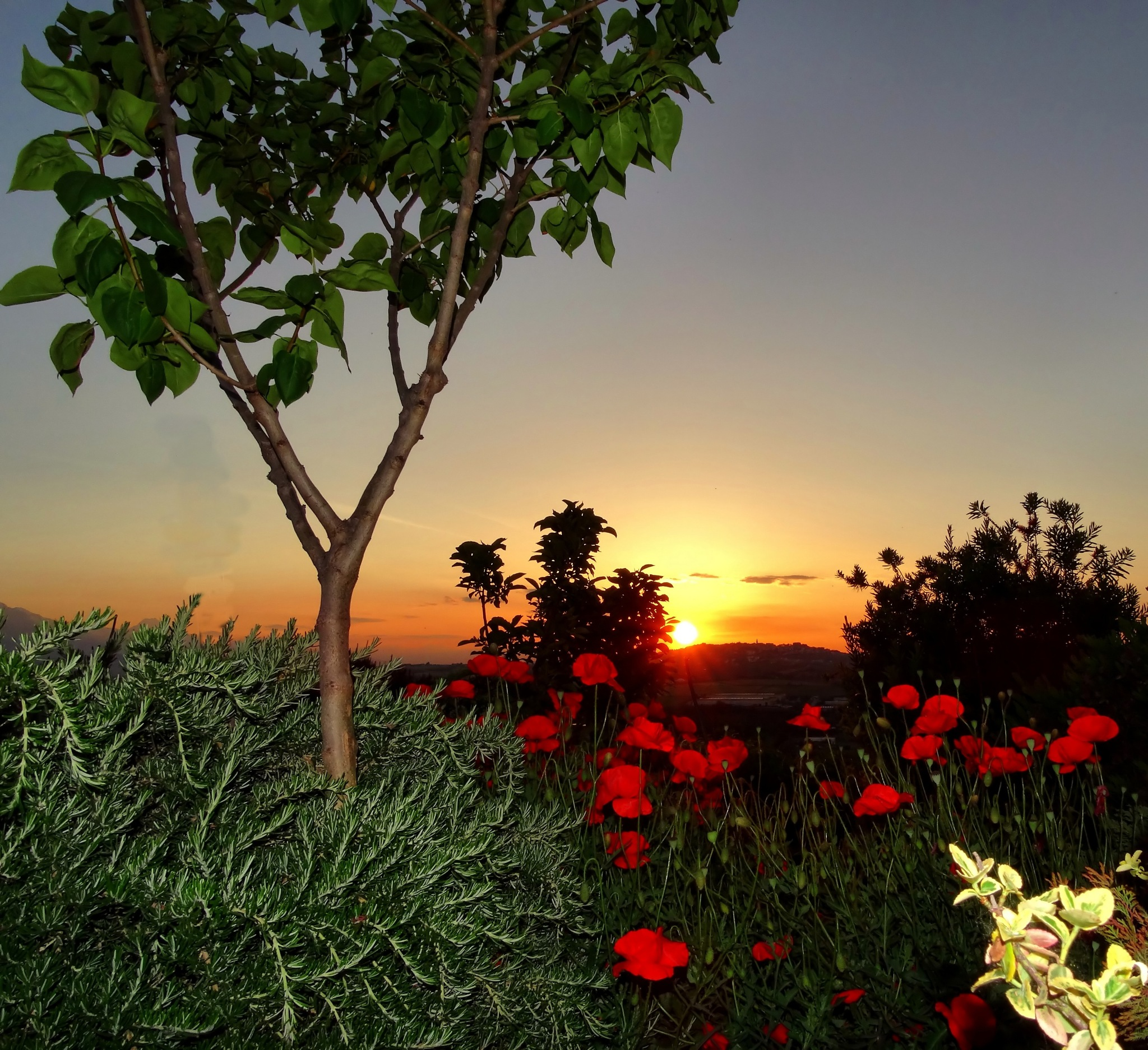 Poppies are red even at sunset by Mariano Arizzi Novelli