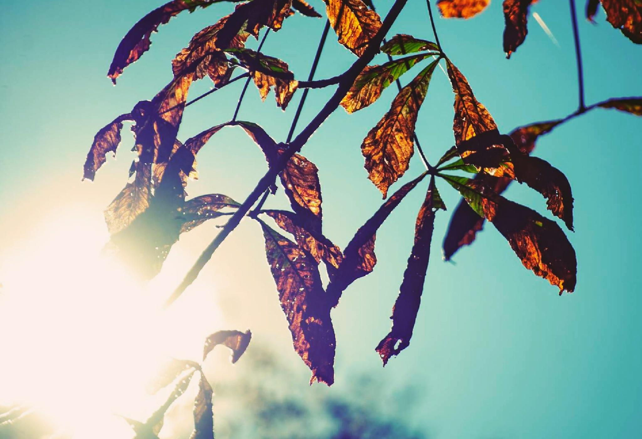 Brown leaves by Gudan Tadej
