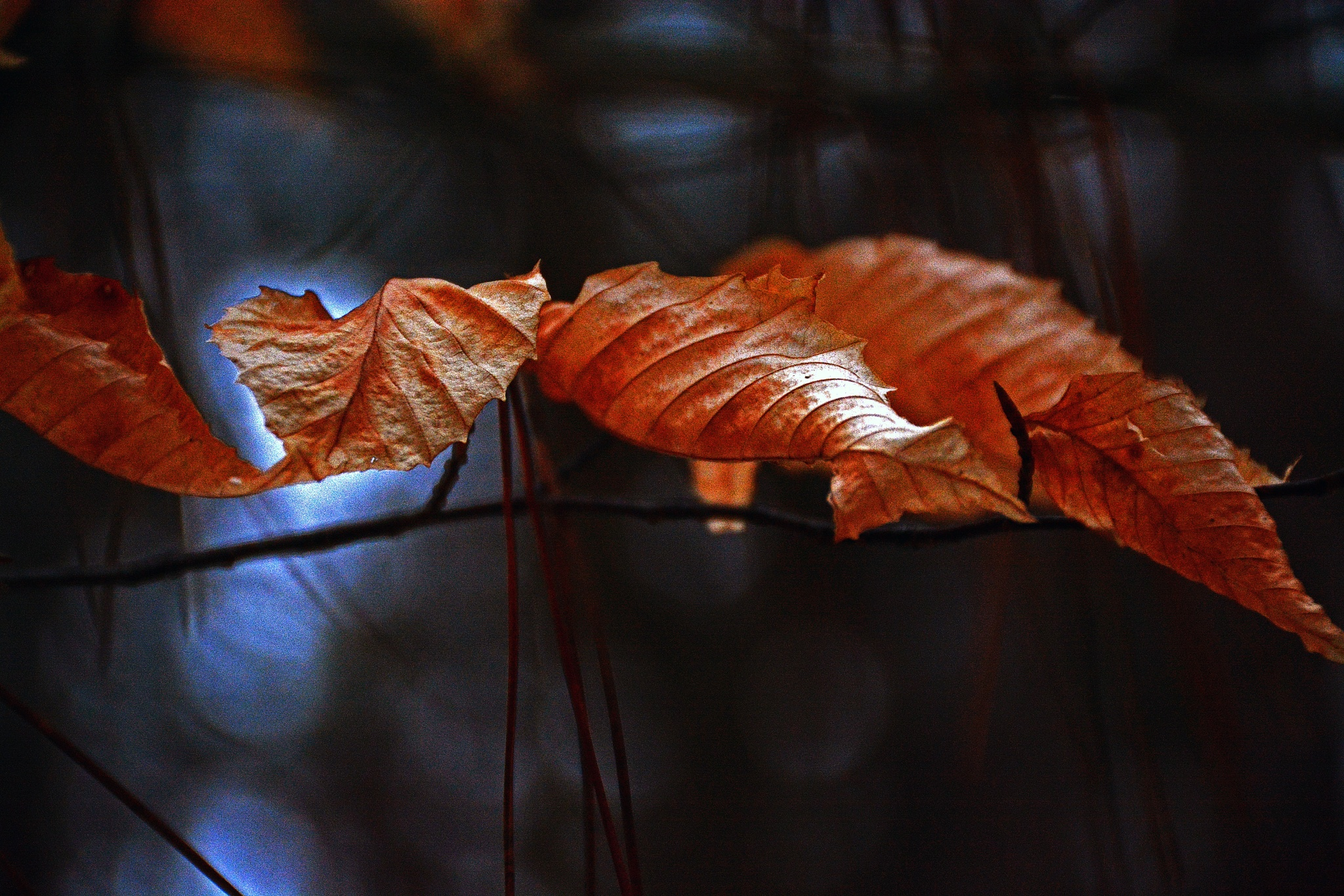 Needles and leaves by William C. Burton