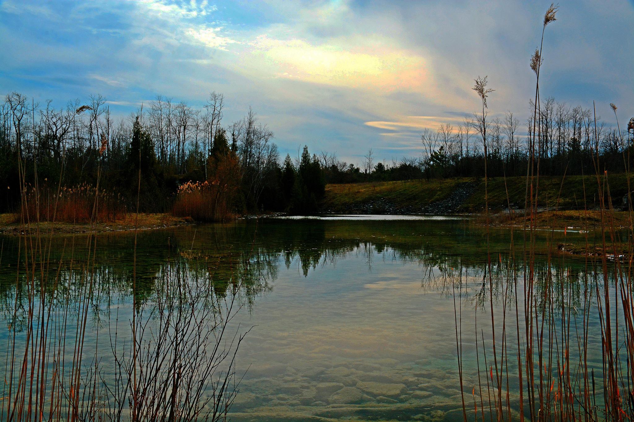 Nature preserve  by William C. Burton