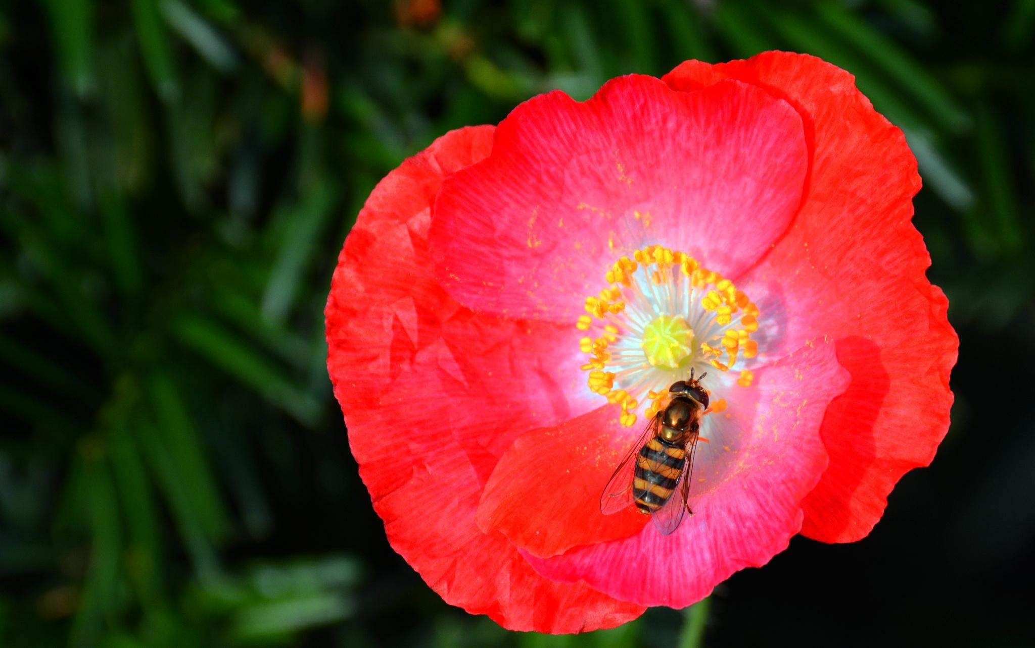 Bee on flower by William C. Burton