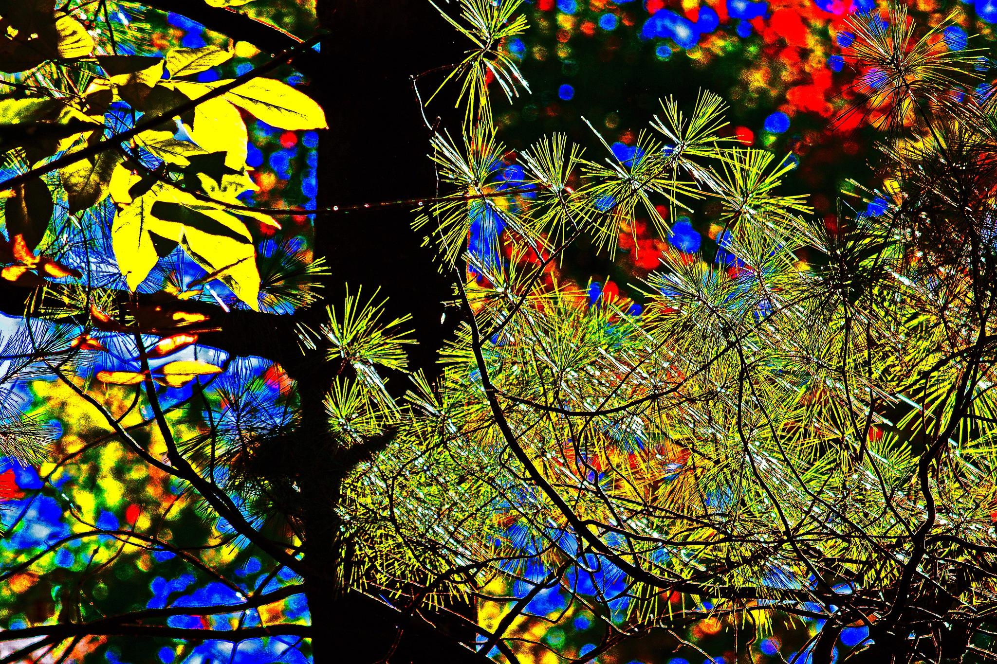 High-lighting by William C. Burton