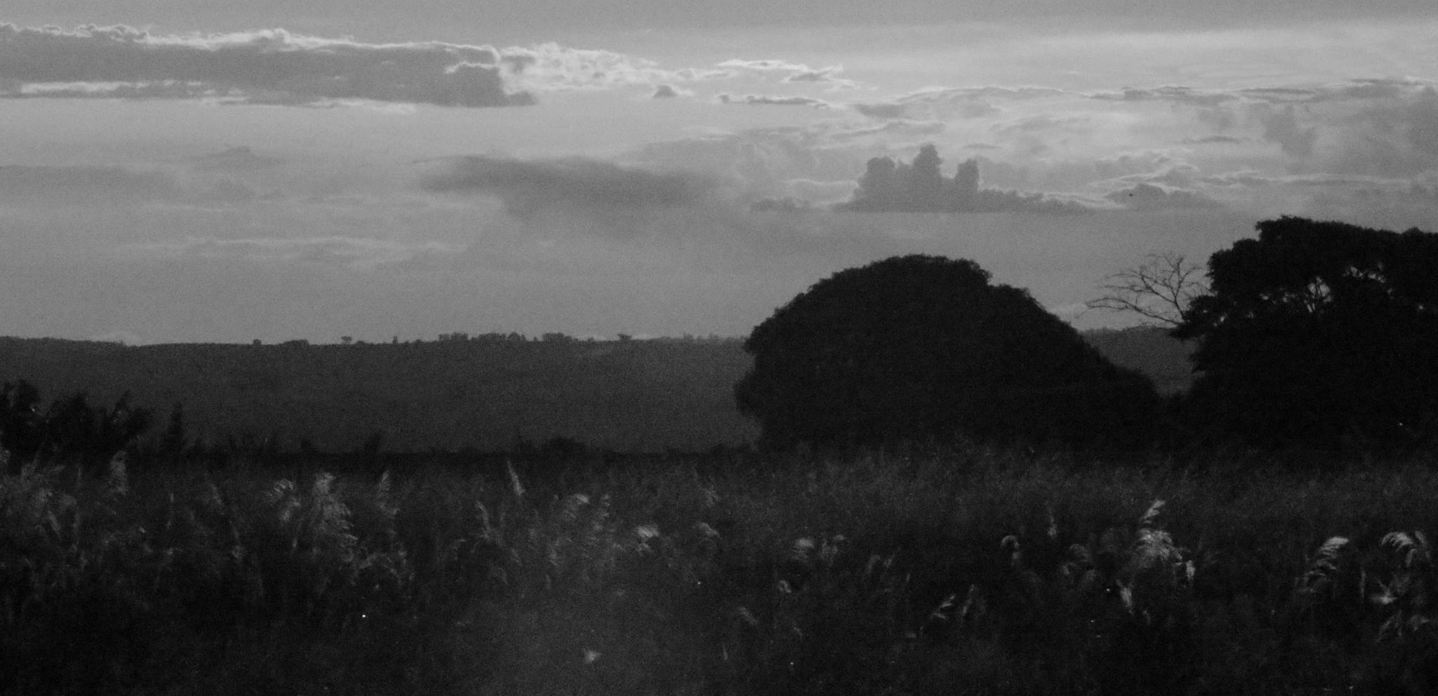 The neverland of silence by marceloazevedo1972