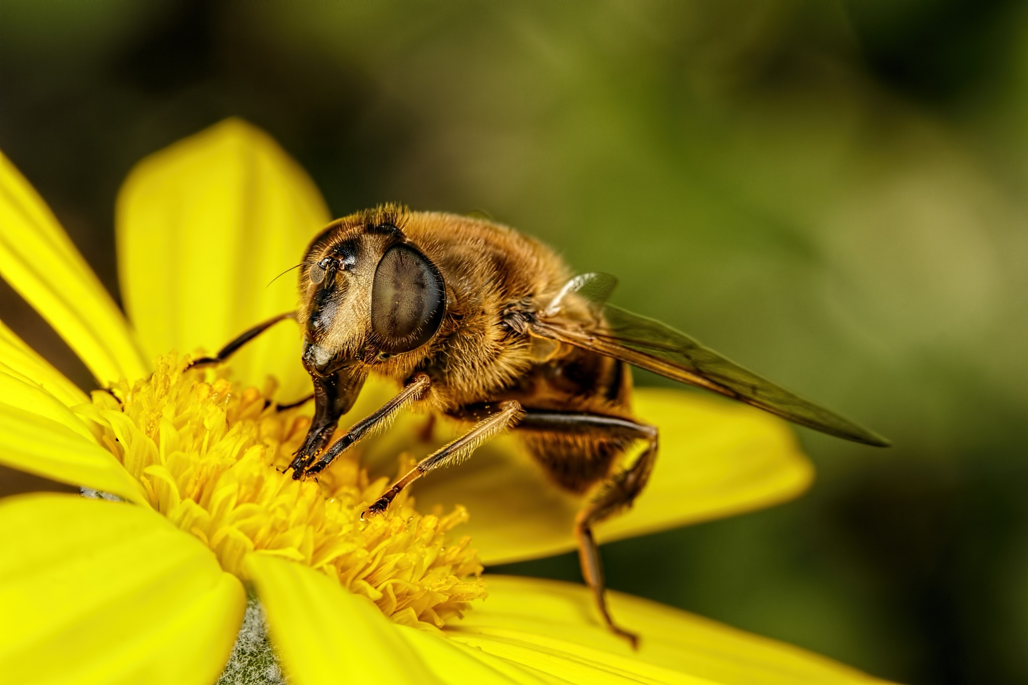 Drone Hoverfly by Dalantech