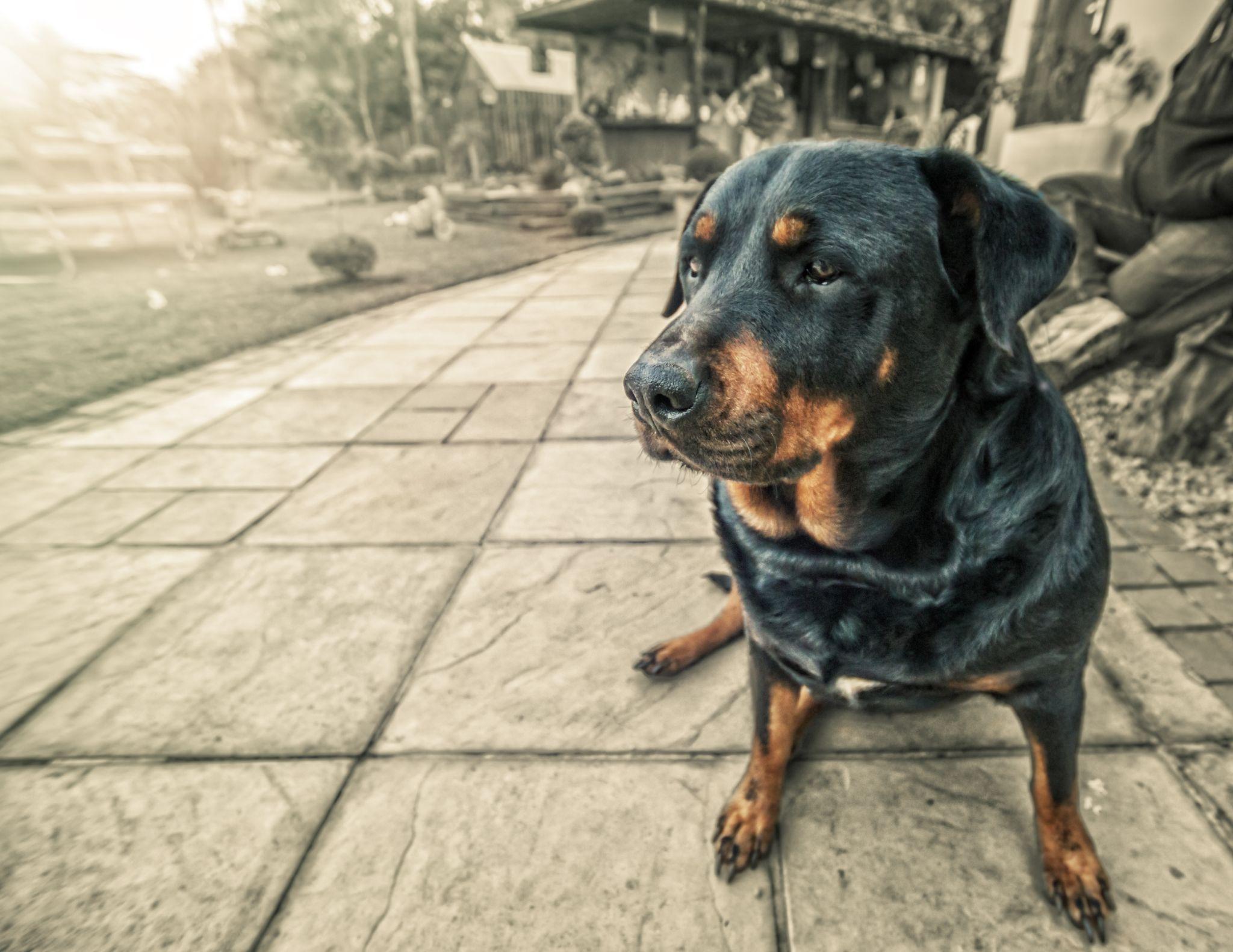 Mans Best Friend  by PaulMack01