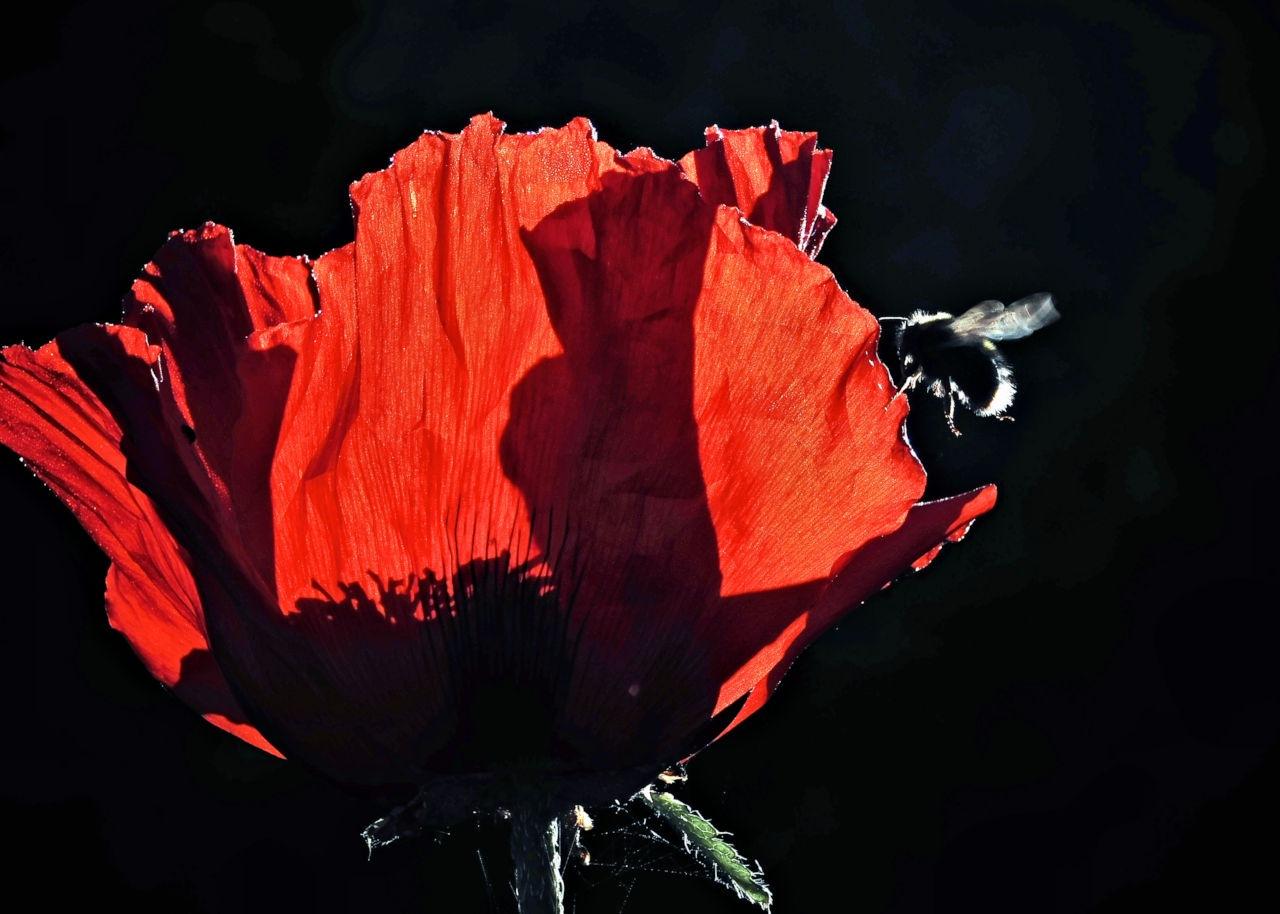 Red 2 by Heppydog