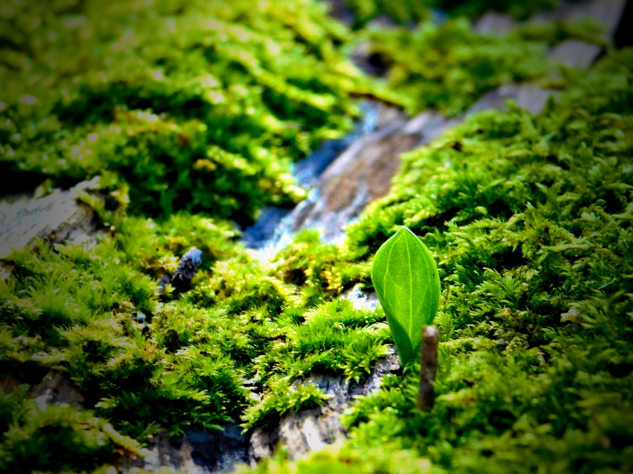 New Life on a Fallen Tree by Heppydog