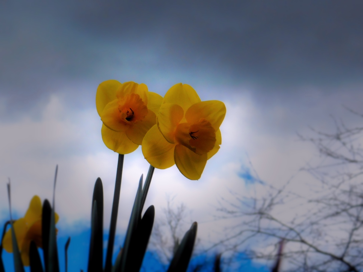 A Little Brightness on a Cloudy Day by Heppydog