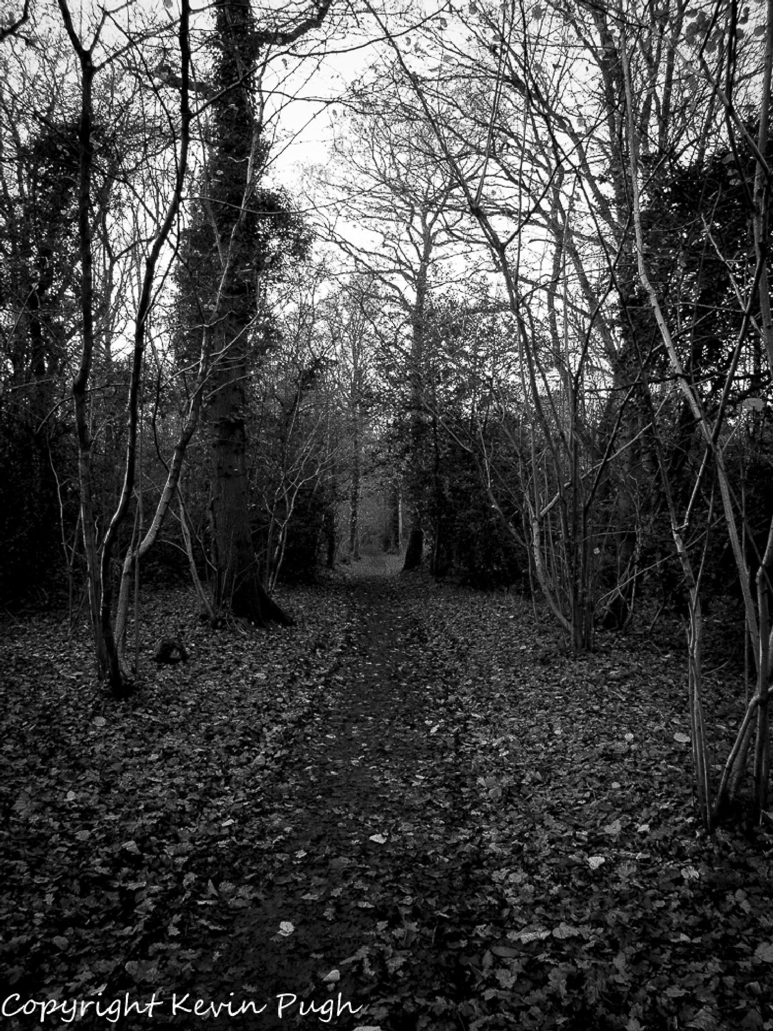 I walk this path alone by kevPugh