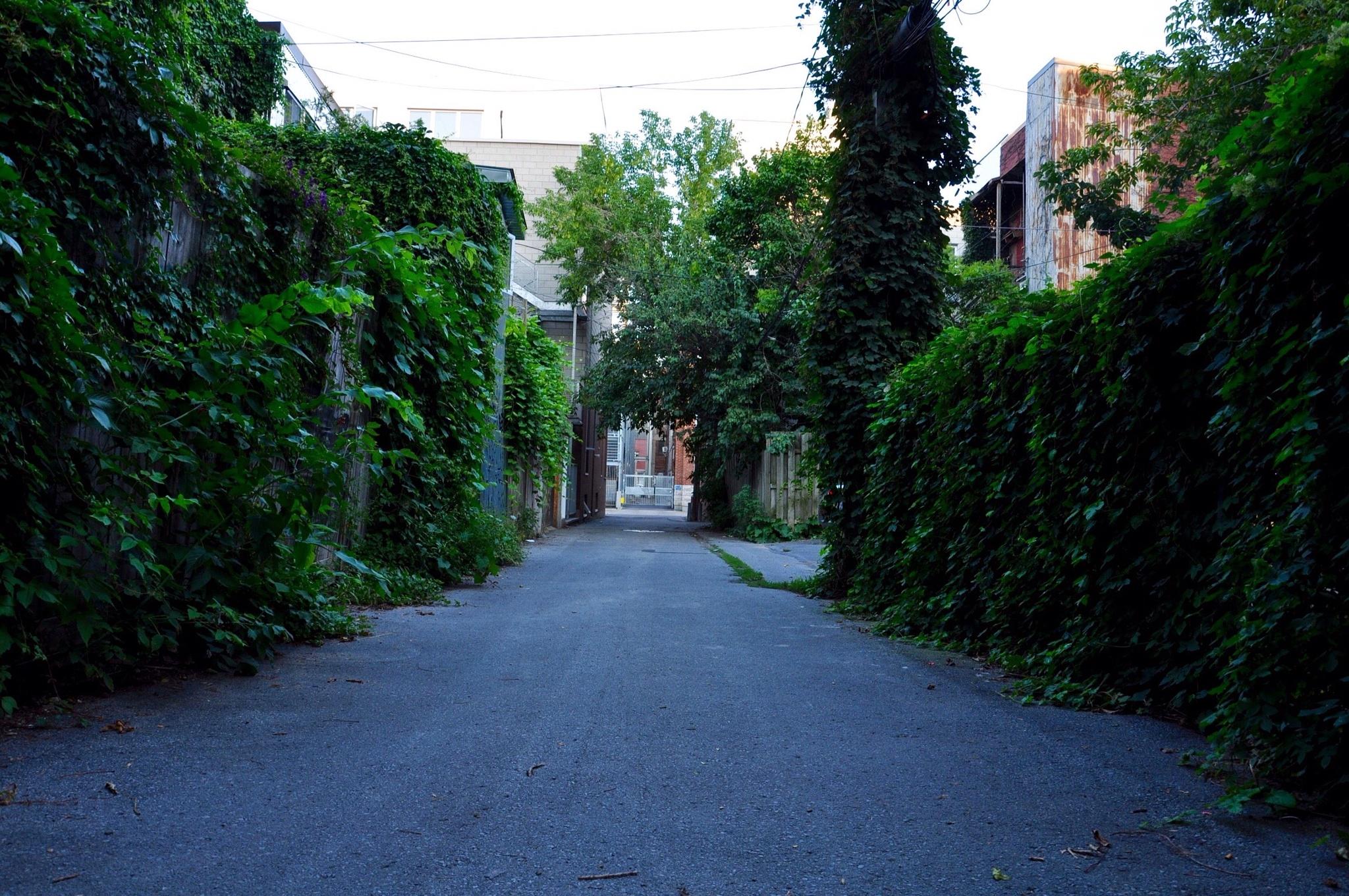 Urban Jungle by Sofhojab
