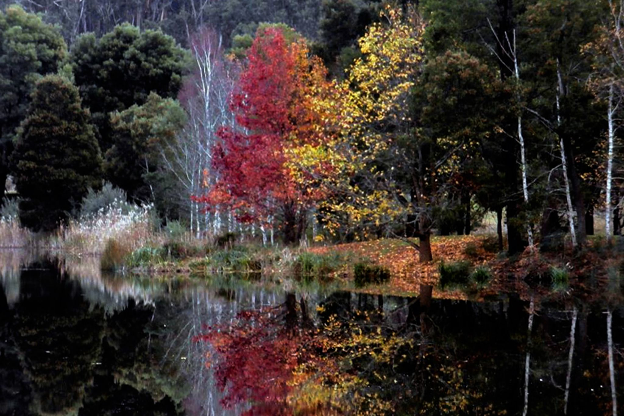 Autumn Reflections by Elysian Photography