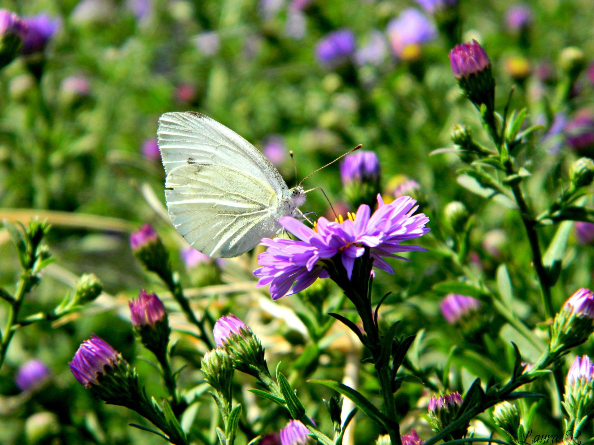 butterfly by Rusu Laura Mihaela