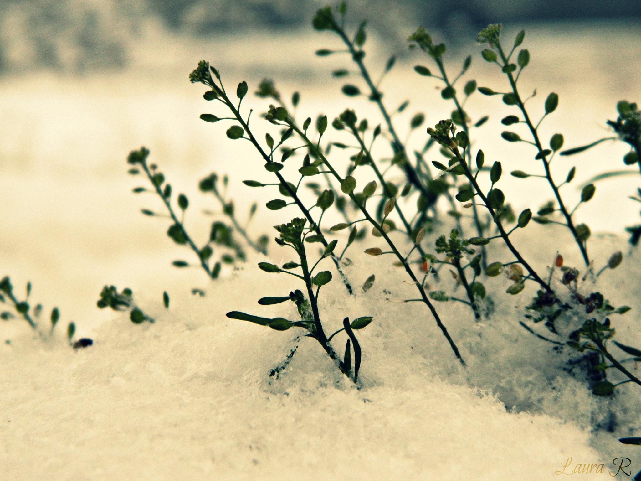 Winter by Rusu Laura Mihaela