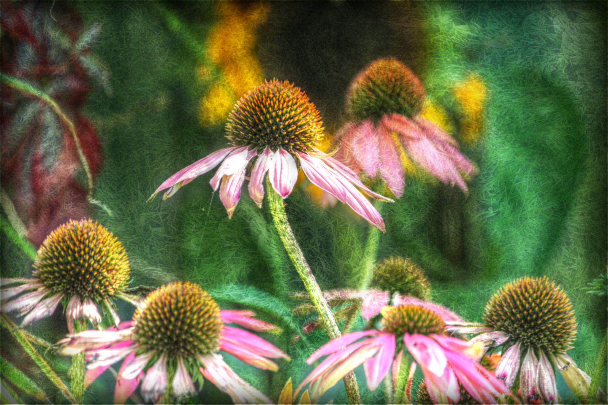 flowers by sillitilly