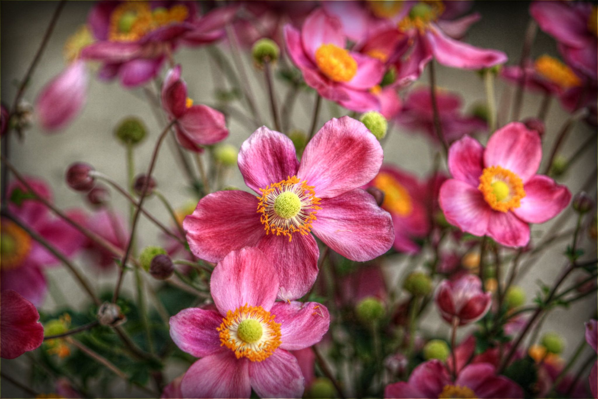 Anemone by sillitilly