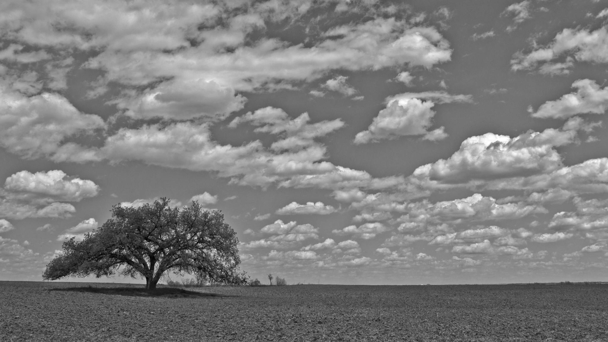 Lone Tree by kraganderson
