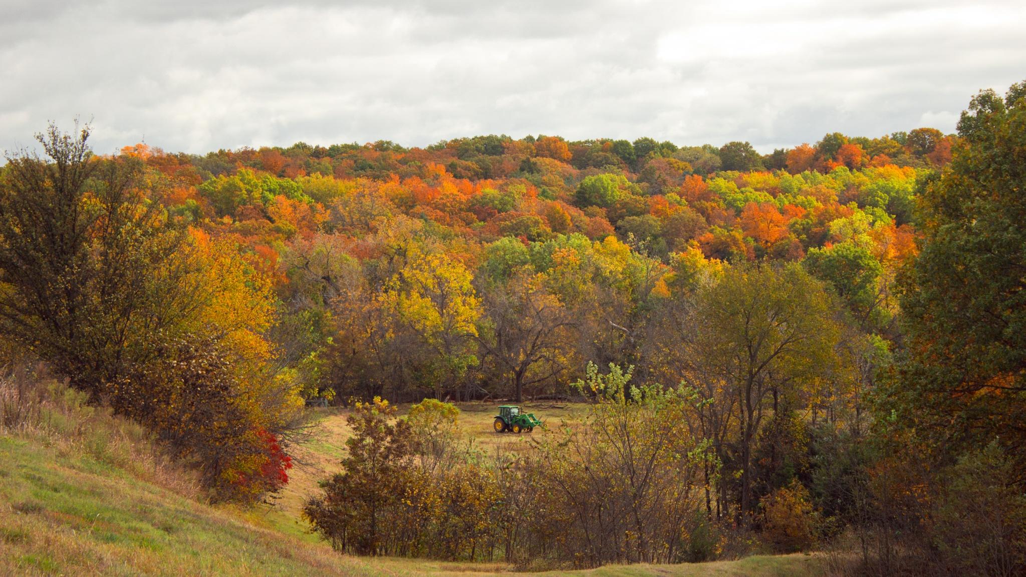 Autumn Spendor by kraganderson