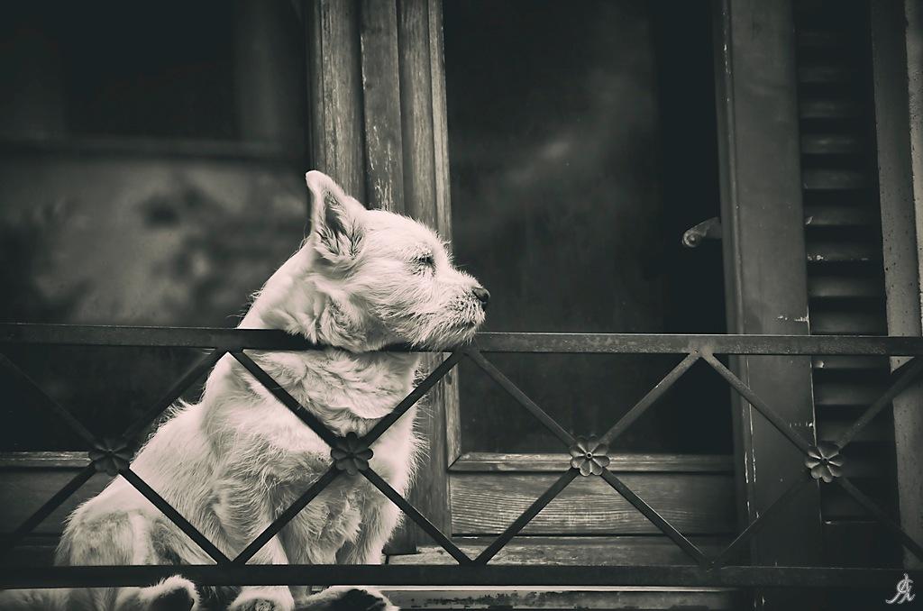Pains of love by Alessandro Giorgi Art Photography