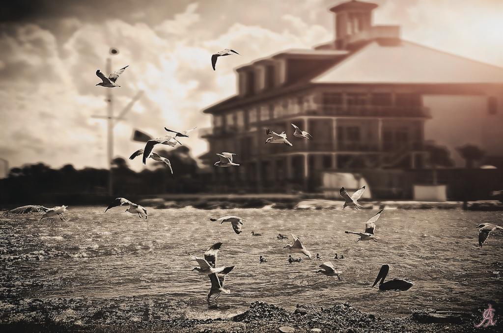 Flying by Alessandro Giorgi Art Photography