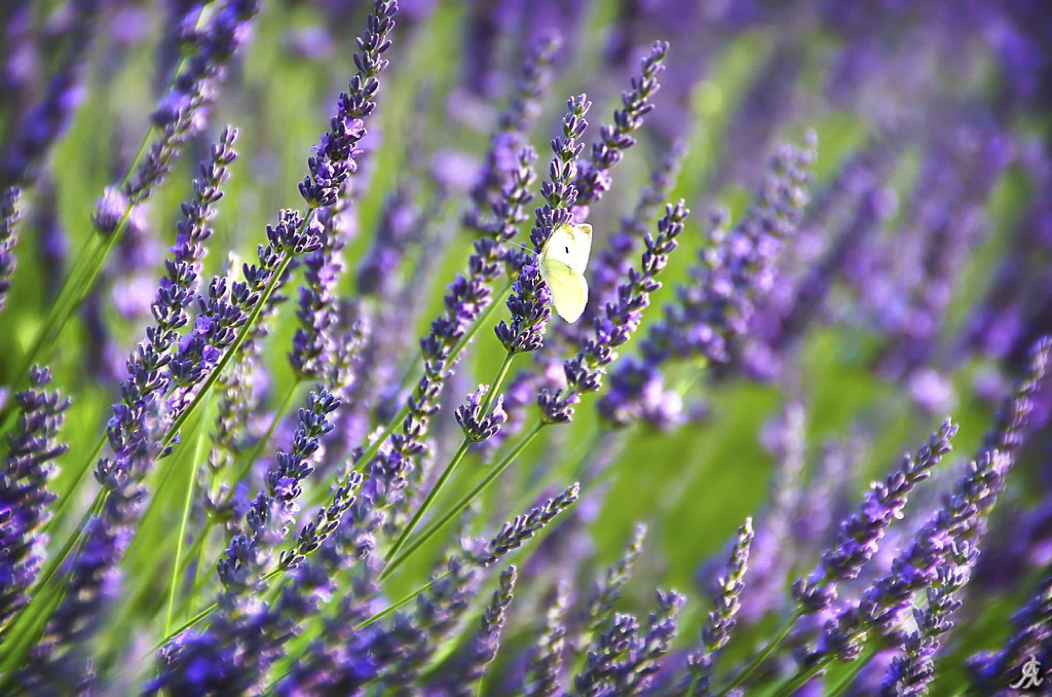 Life into the purple by Alessandro Giorgi Art Photography