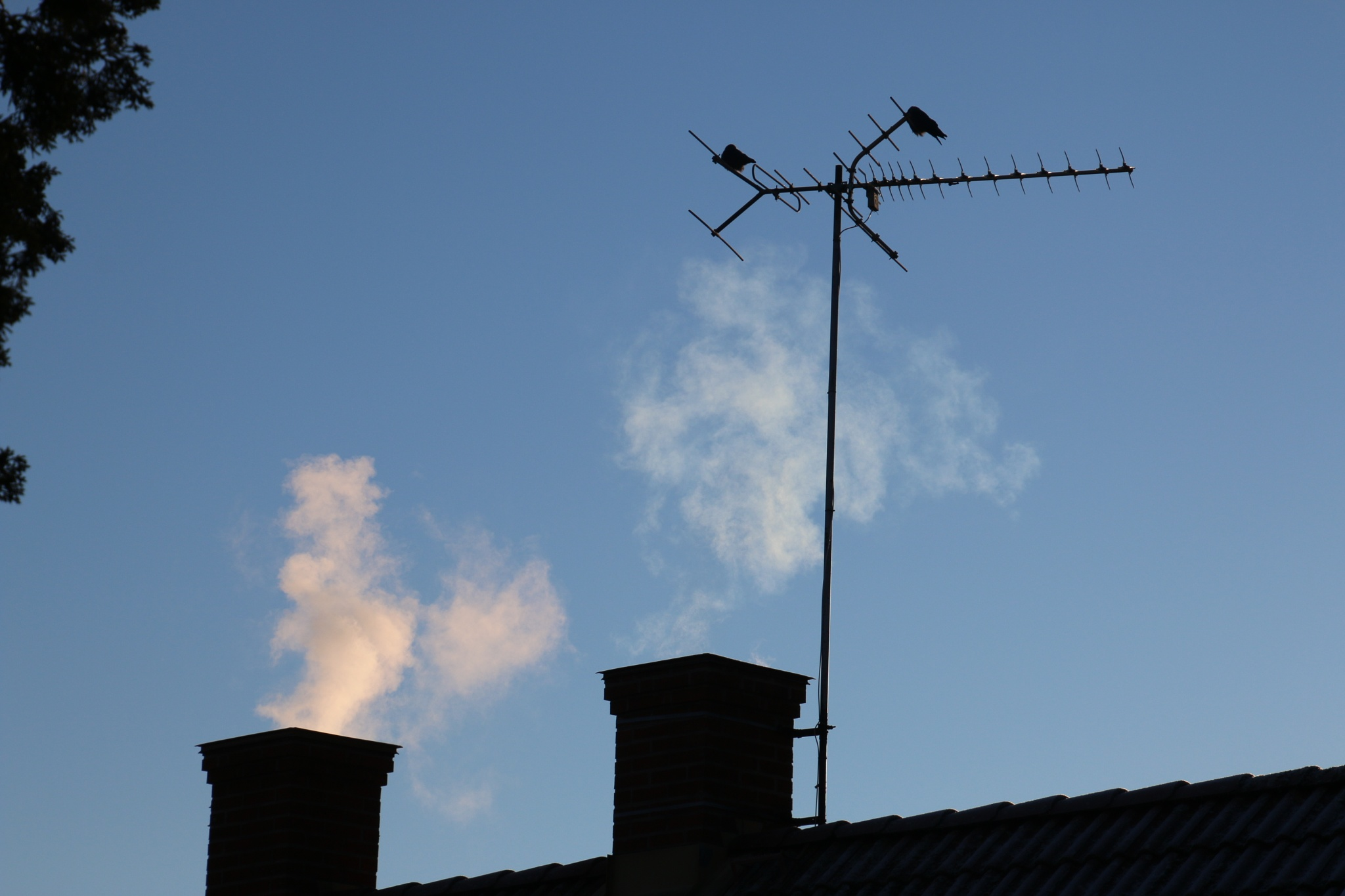 Jackdaws keeping close to the chimneys by Mikael Ekström
