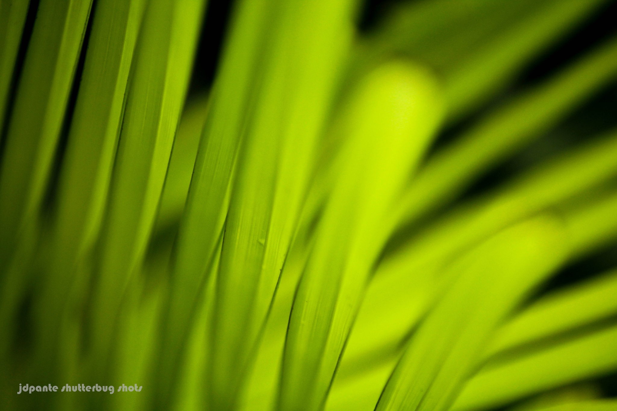 Coconut Leaves by yunapante
