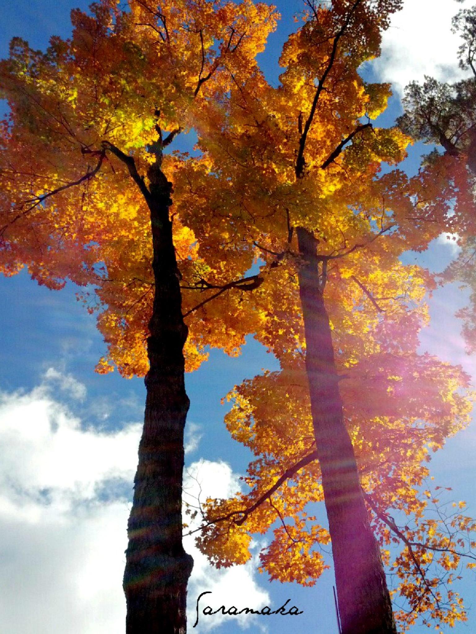 Autumn Sunbeam by Sarah Vinna Davis