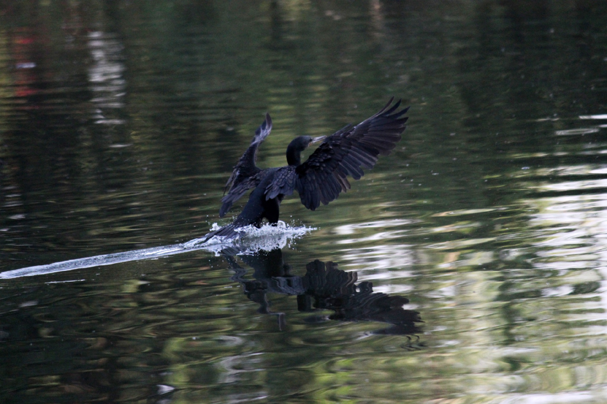 Landing by rajshree