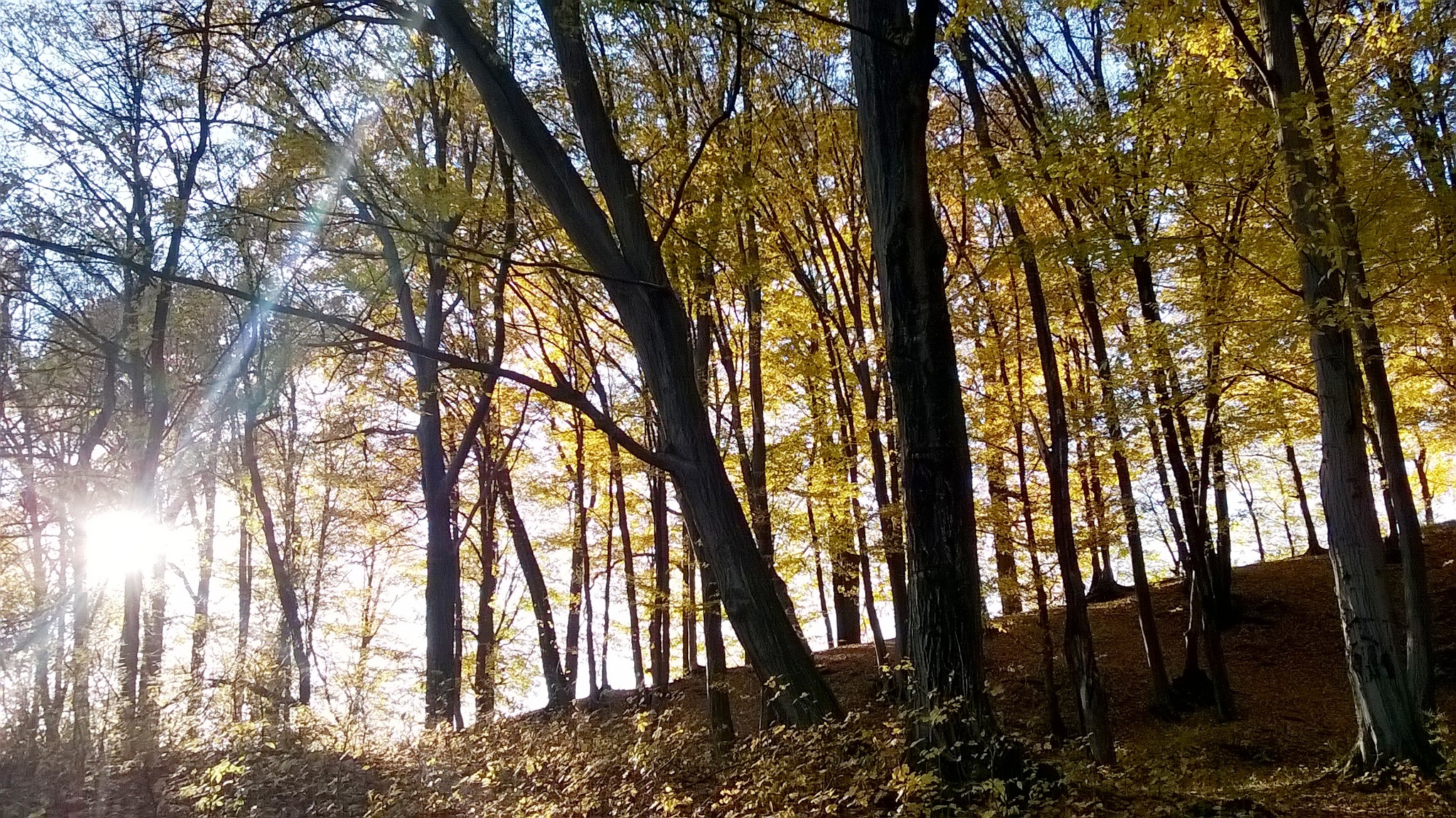 Walking in the forest by Autumn Leaves