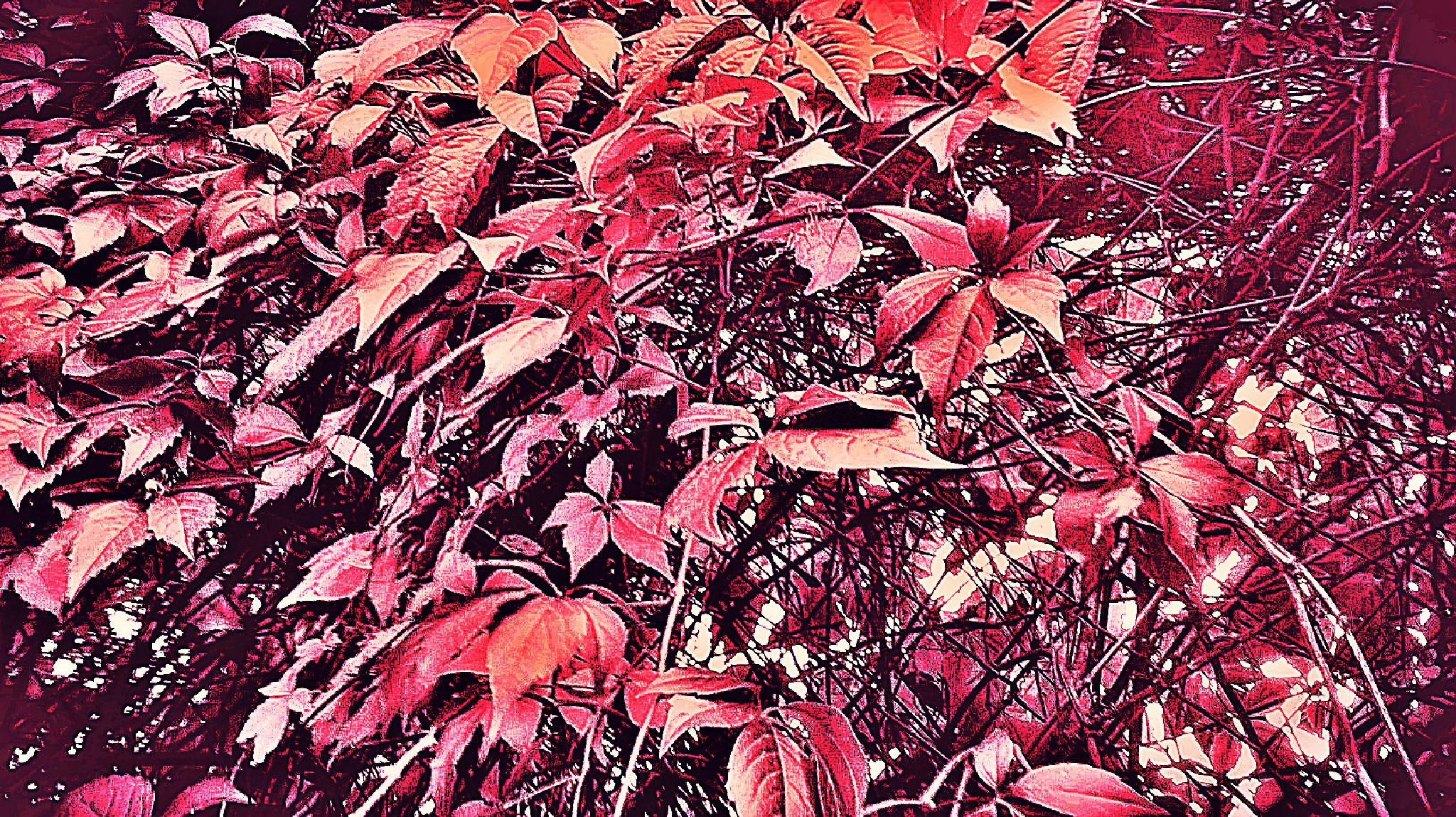 Autumn leaves by Autumn Leaves