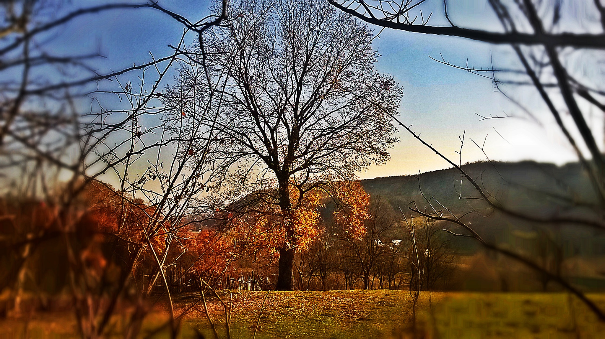 Tree in autumn by Autumn Leaves