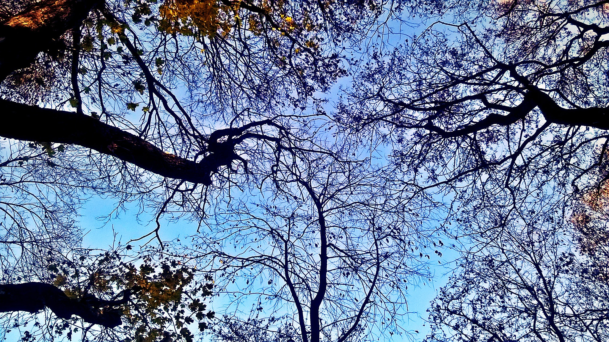 Trees in autumn by Autumn Leaves