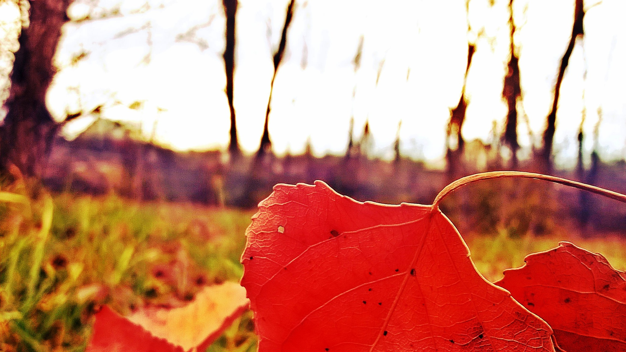 Autumn time by Autumn Leaves