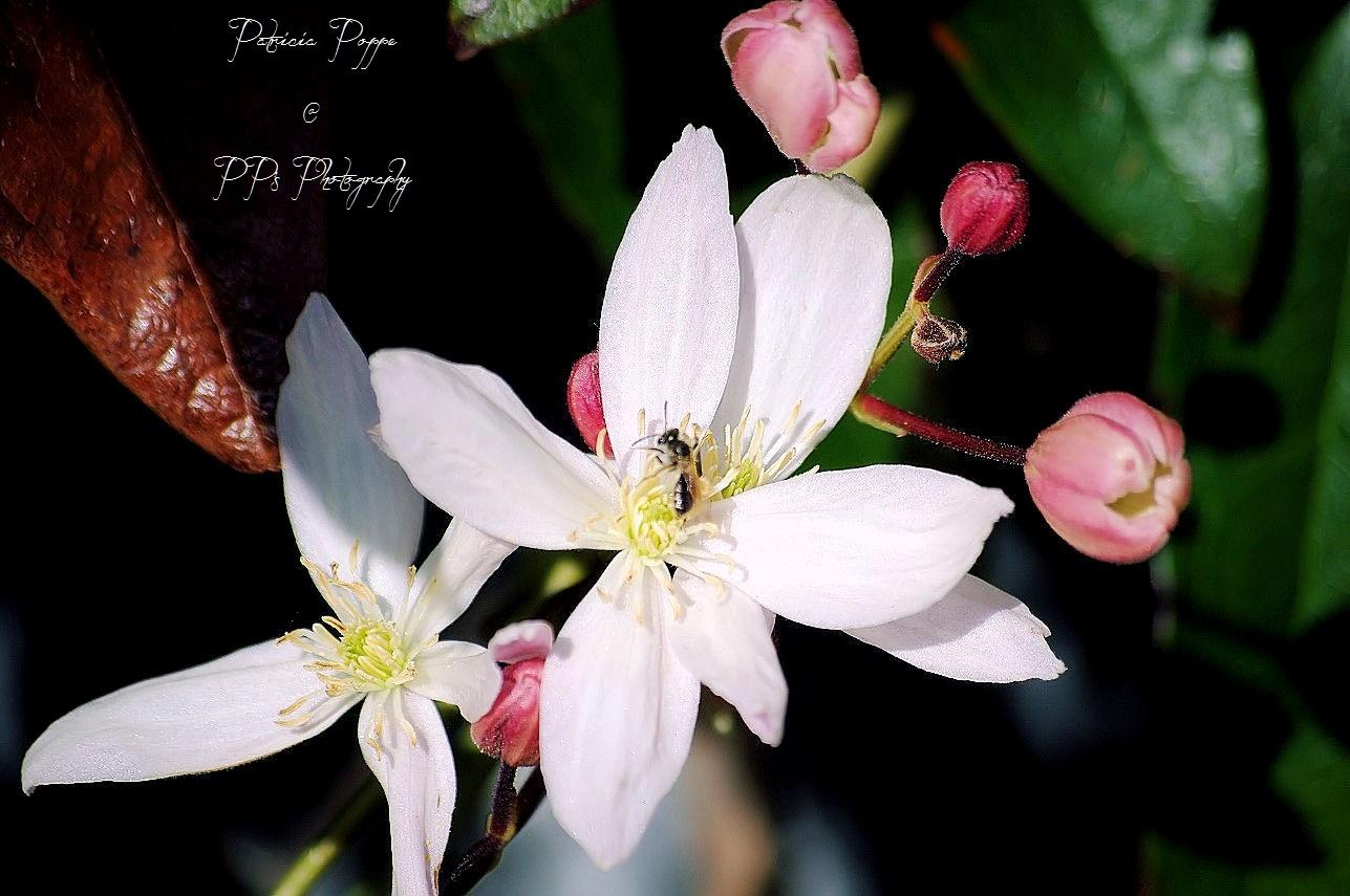 Spring by Patricia Poppe