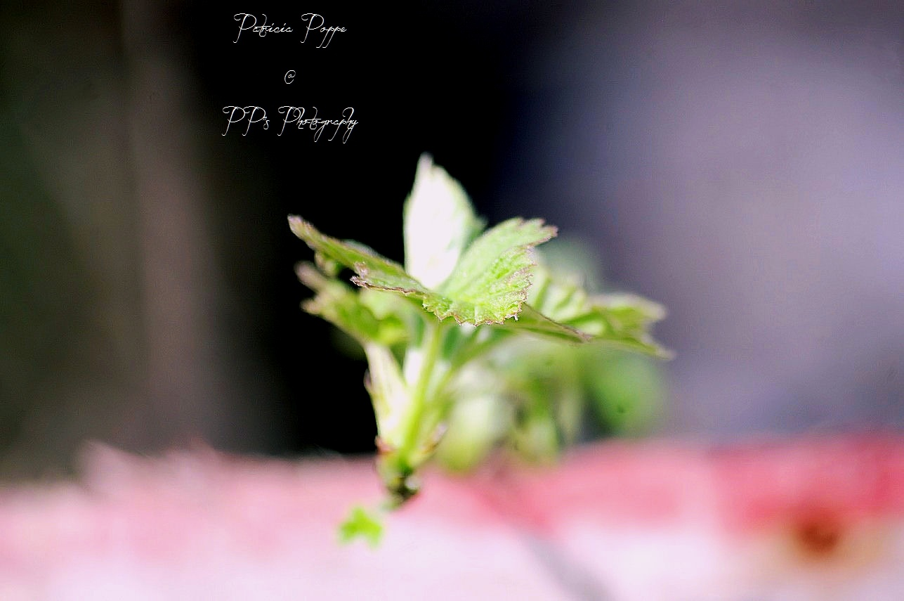 Green by Patricia Poppe